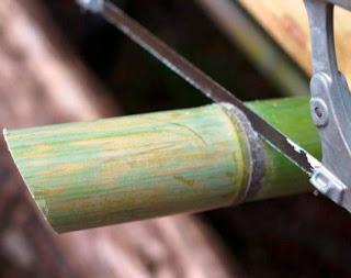 penggergajian batang bambu untuk kerajinan