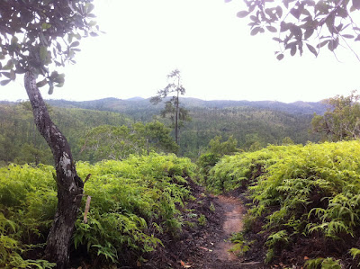 View from the peak of tiger fern trail with McKinley Pritchard in Belize