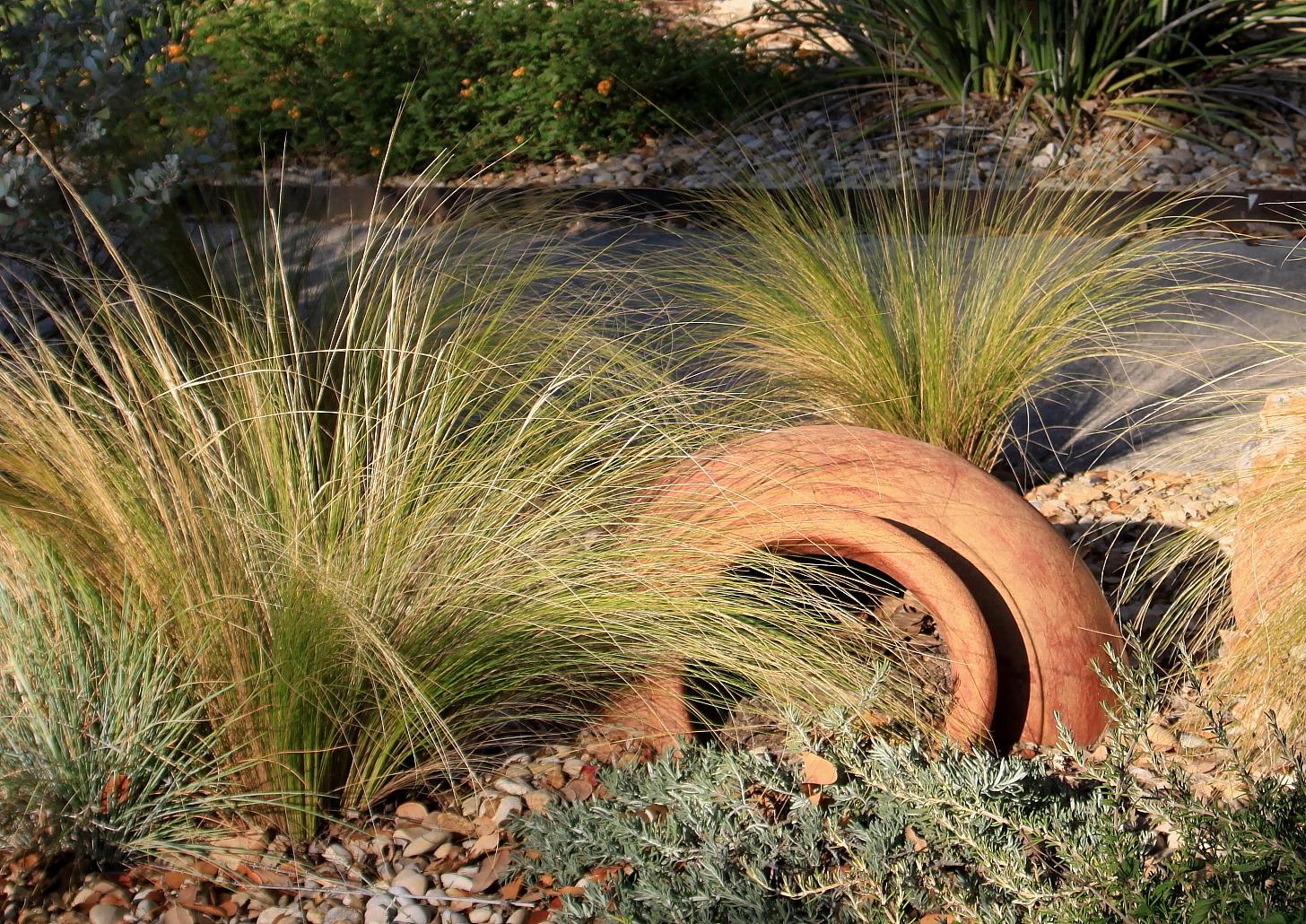 Rock-Oak-Deer: Plant ABCs: N is for Nasella Tenuissima