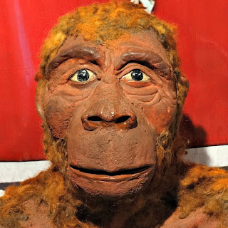 Lucy, a macaca bípede - Museu Ufologia, Itaara (RS)