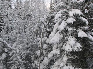 Ely April snow storm 2013