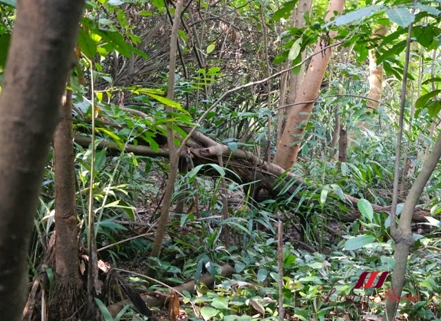 heritage trail forest discover hidden bunkers