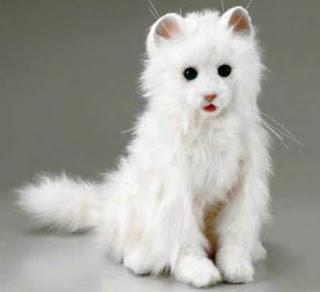 Gambar Kucing Anggora Lucu dan Imut 100021