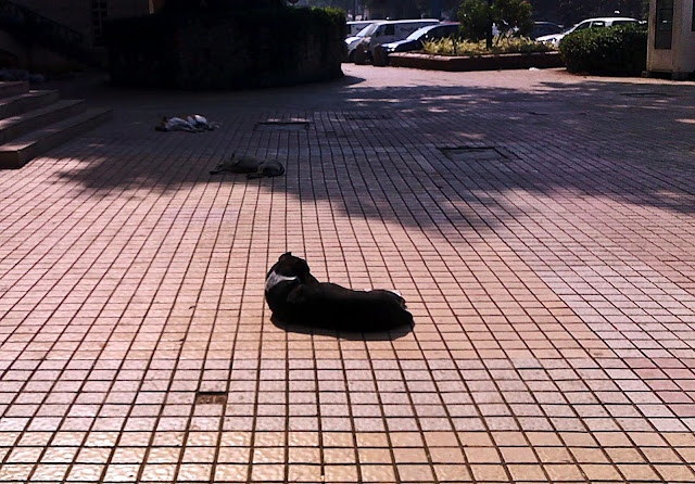 sleeping dogs on pavement
