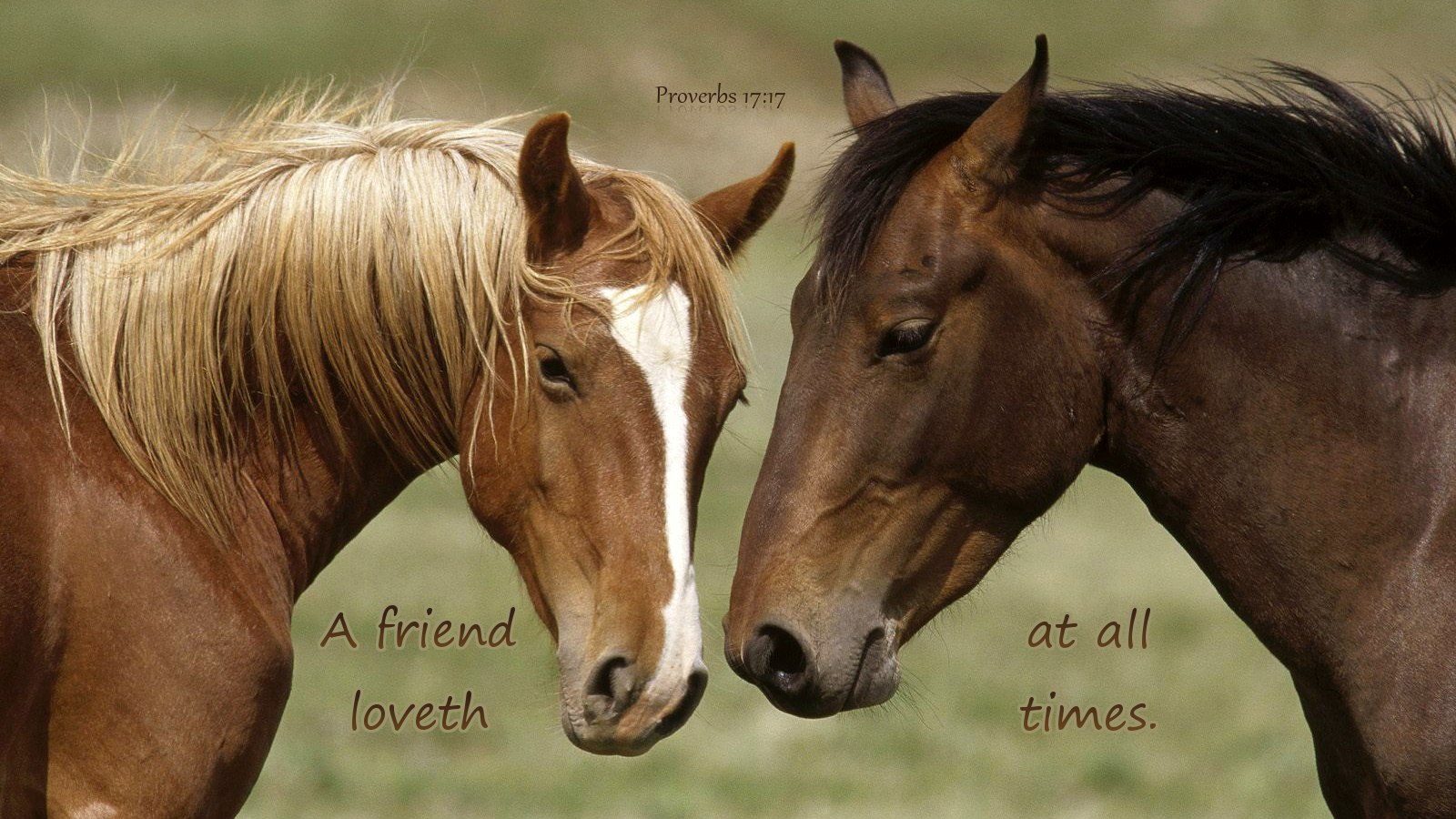 Beautiful   Wallpaper Horse Bible Verse - A-friend  Perfect Image Reference_17112.jpg
