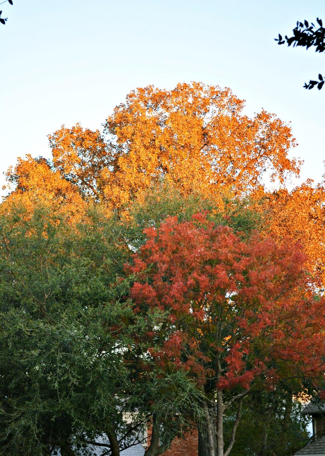 fall trees // grateful
