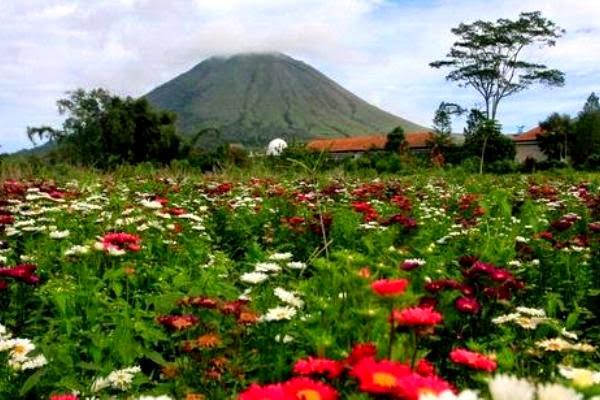 bunga-bunga-di-kota-tomohon1.jpg