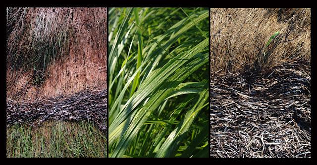 Grass; Seaweed; Nova Scotia; Triptych