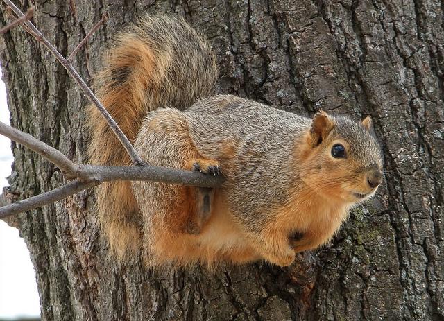 Cute squirrels in love - photo#17