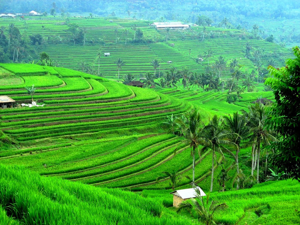 Beautyfull nature picture bali nature wallpaper for Terrace nature