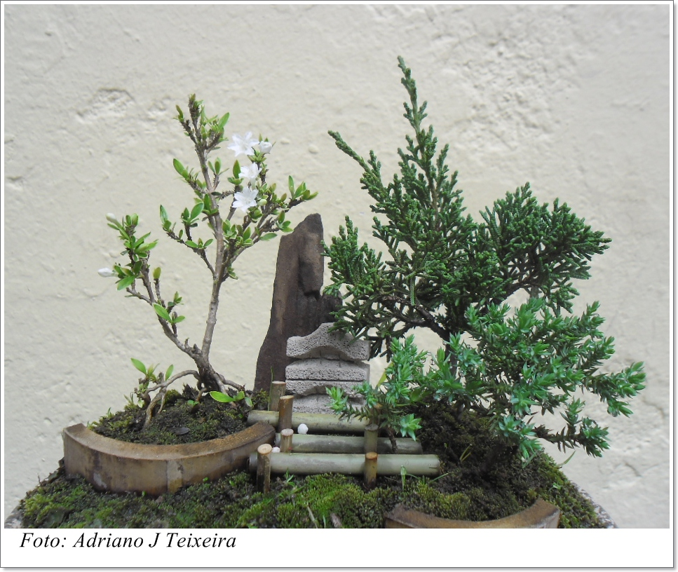 mini jardim oriental : mini jardim oriental: bonsai 7cm altura suas formas muito delicadas um mini jardim oriental