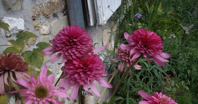 Derri re les murs de mon jardin retour de vacances - Derriere les murs de mon jardin ...