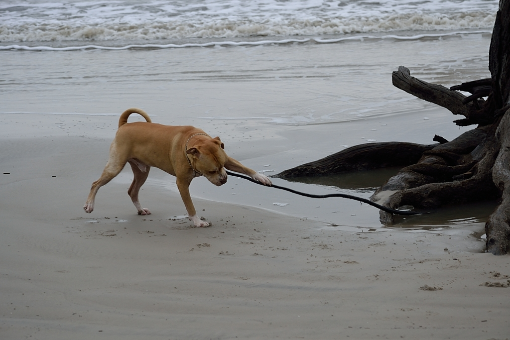 Can Dogs Go To Shell Island