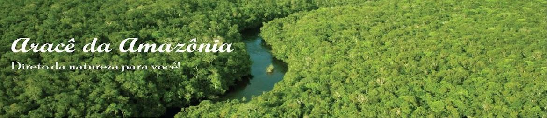 Aracê da Amazônia