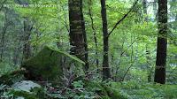 bosco di baselga