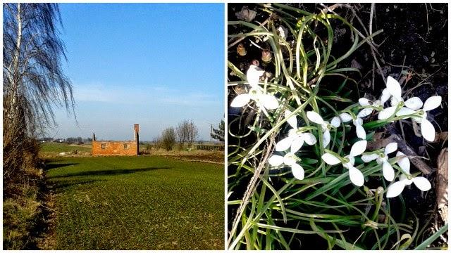 oznaki wiosny