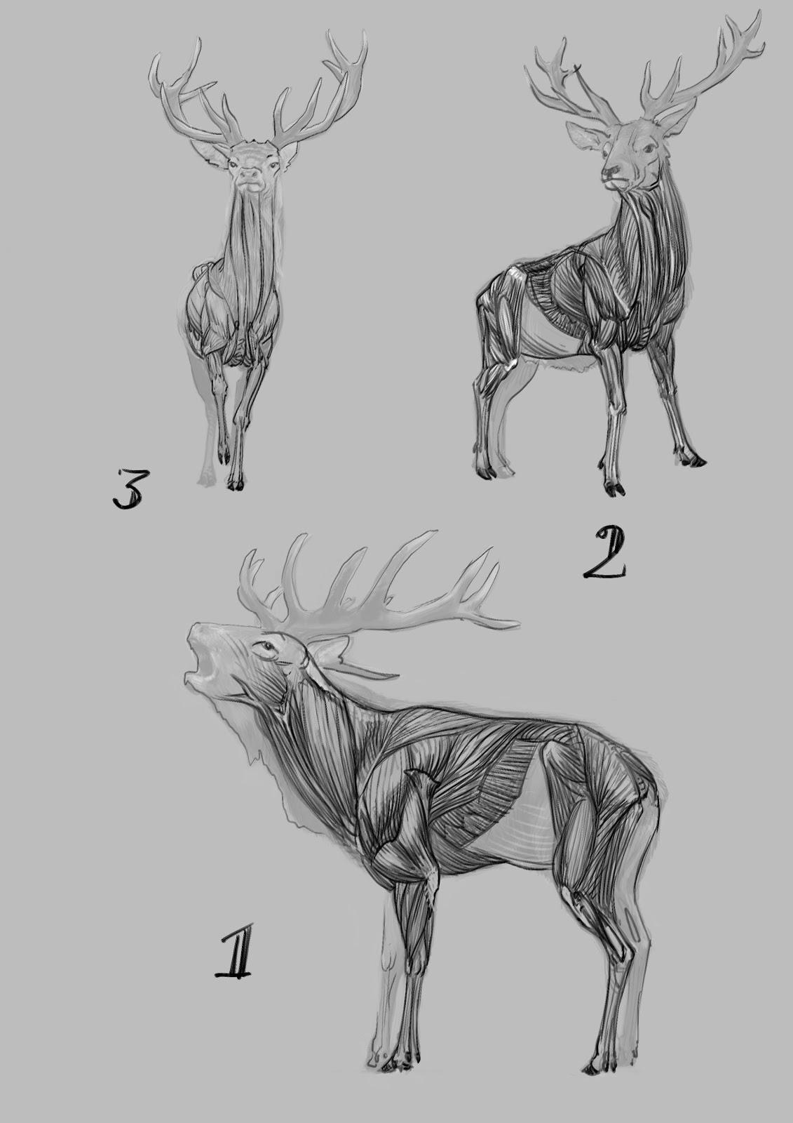 home deer skeleton
