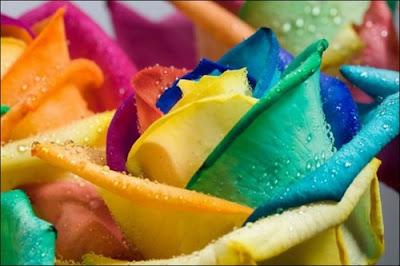 1 'قوس قزح' من أجمل الزهور التي قد تراها   حقن الزهور بصبغات مختلفة