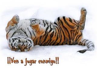 Tigre recostado