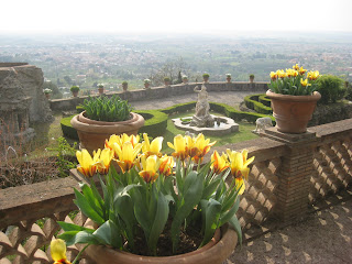 Tulips in the gardens of Villa D'Este