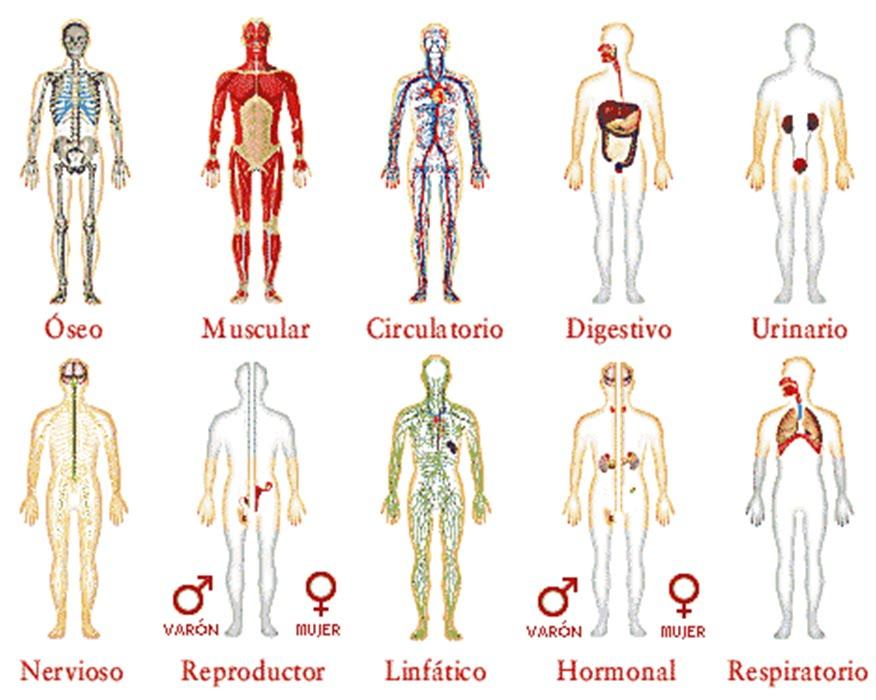 Salud e Higiene: Los Sistemas del Cuerpo Humano
