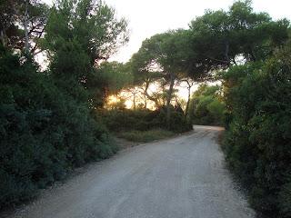 Sunset forest Way photo - La Devesa - El Saler - Spain