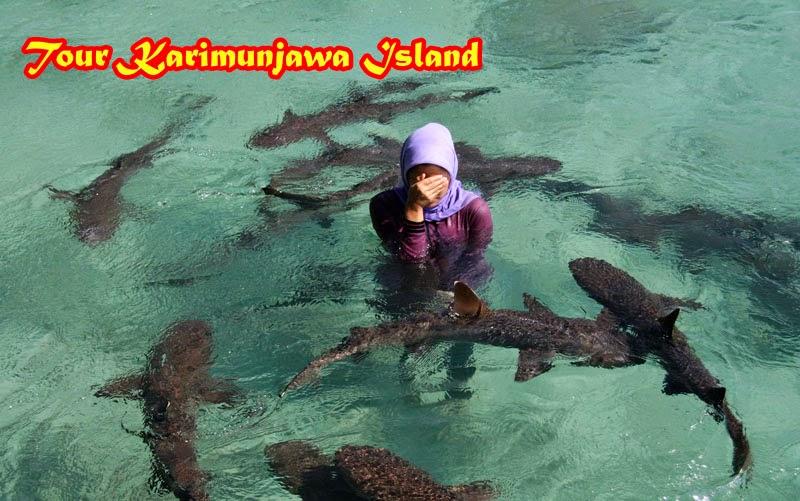 hiu karimunjawa