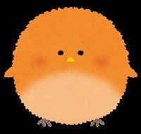 丸い鳥のイラスト「オレンジ」