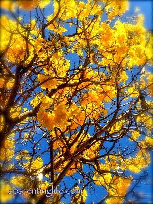 Australian native flower