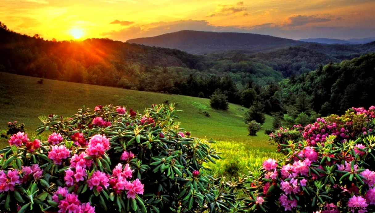 spring natural scenery hd - photo #18