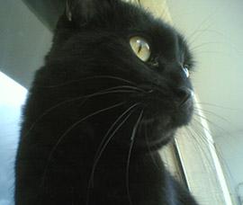 il nostro adorato micione Leo