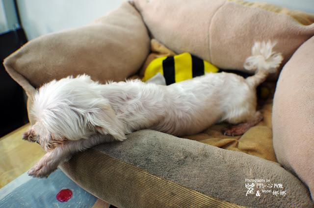 2011.6.5 擾眠之章 寵物攝影 娜娜