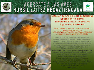 Proyecto Green Capital de anillamiento de aves  -   Hegaztien eraztunketako Green Capital proiektua