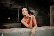 Surveen Chawla Hot Photos-thumbnail-11