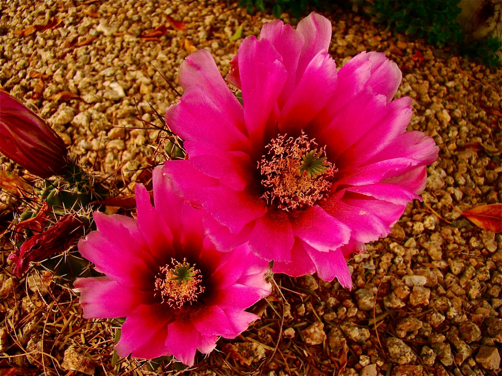 Scottsdale Daily Birthday Bouquet of Cactus Flowers