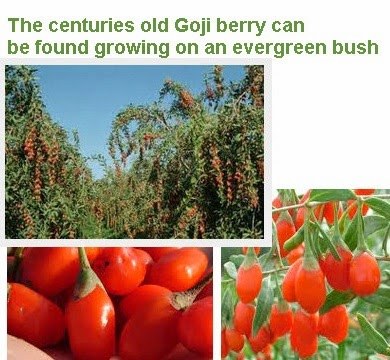 dried goji berries health benefits