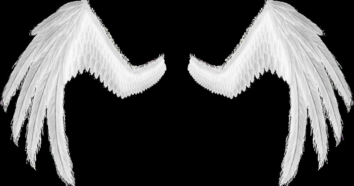 asas de anjo ficam - photo #7