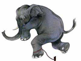 El elefante encadenado curiosidades de hoy for El elefante encadenado