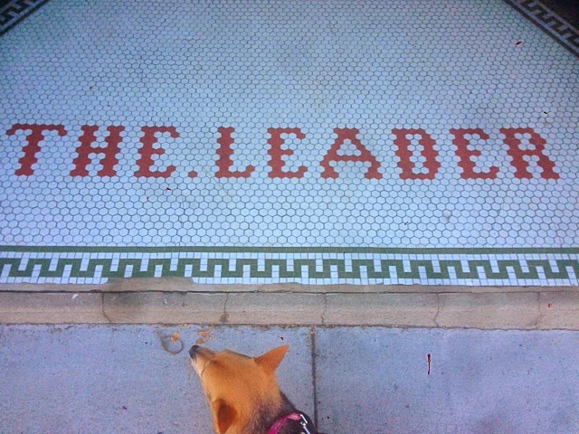 the leader hudson New York, downtown Hudson NY, dogs in upstate New York