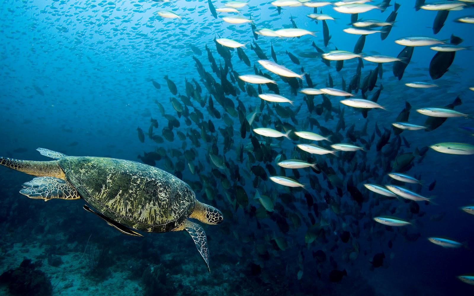 Onderwater foto met school vissen en een schildpad onderwater foto