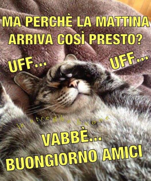 Le streghe buone the original pagina facebook i link for Video divertenti del buongiorno