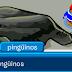 ¡Actualizaciones en Club Penguin!