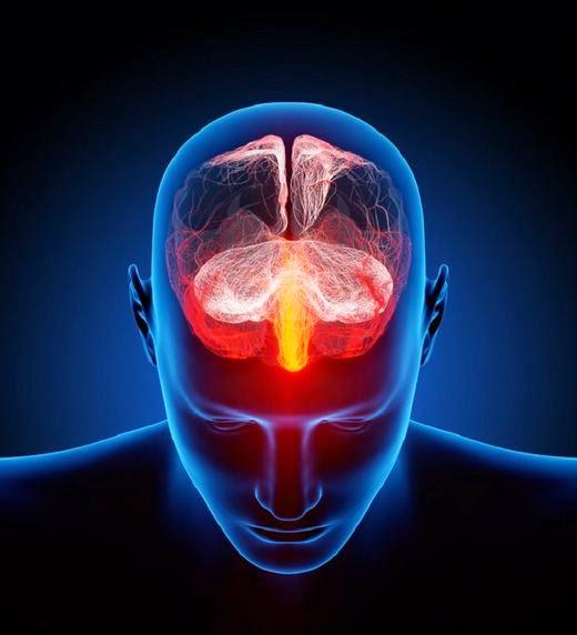 Human_Brain_1_2_0