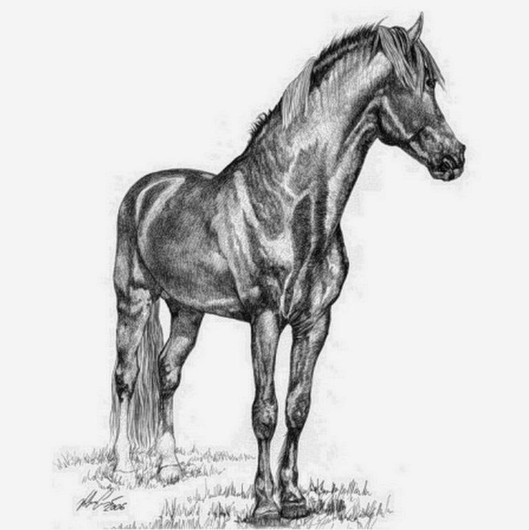caballos-dibujos-a-lapiz-foto