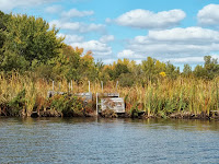 Cherokee Marsh, Dane Co, WI