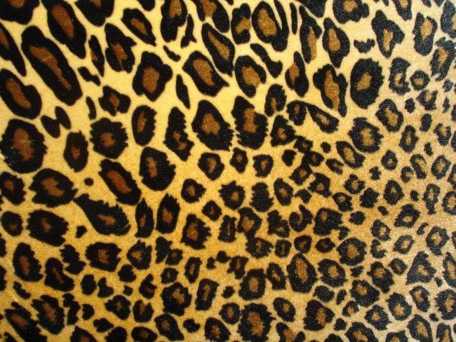 leopard print hq wallpapers. Black Bedroom Furniture Sets. Home Design Ideas