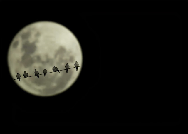 Birds watching the moon
