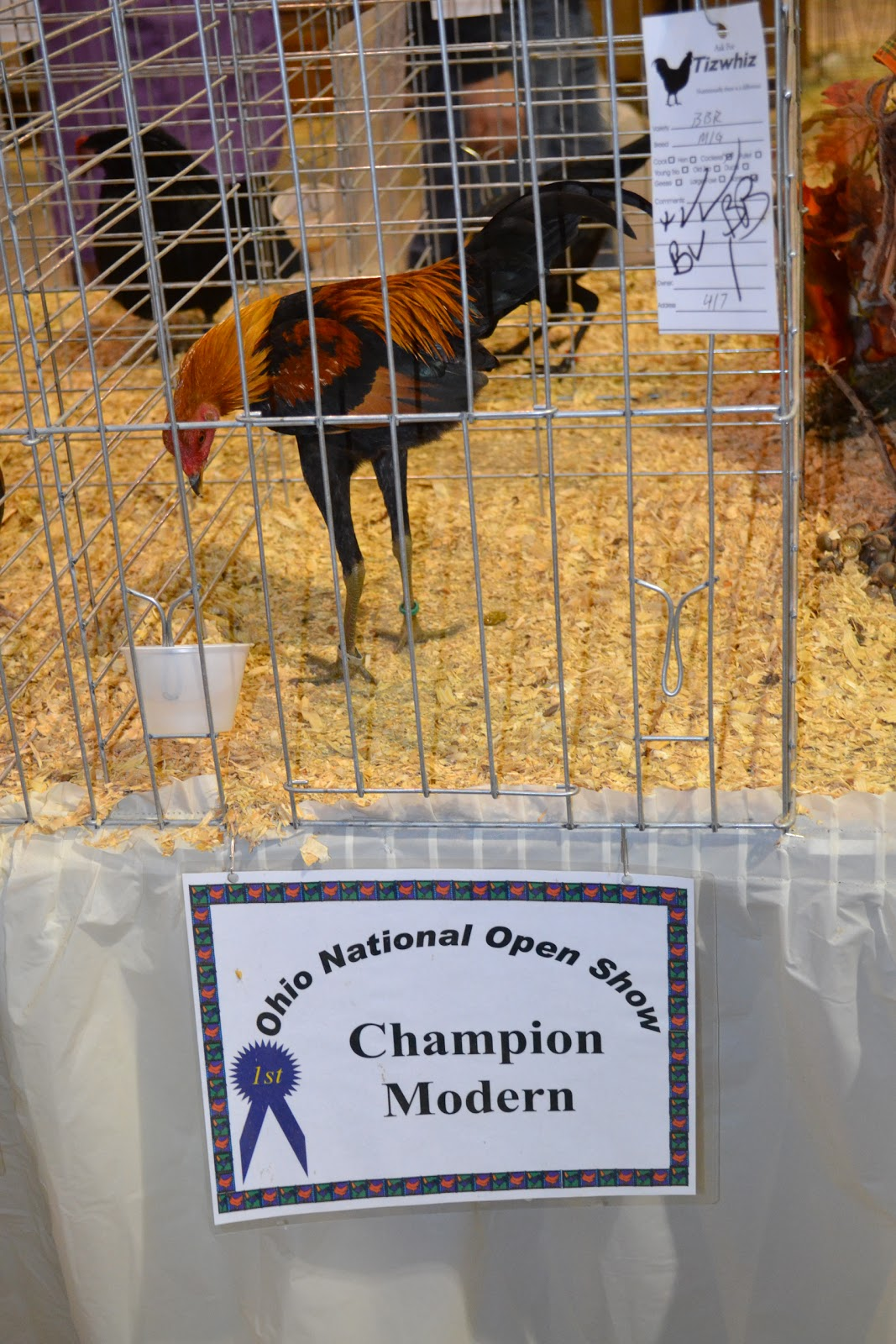 Ohio National Poultry Show: Ohio National Winner Photos