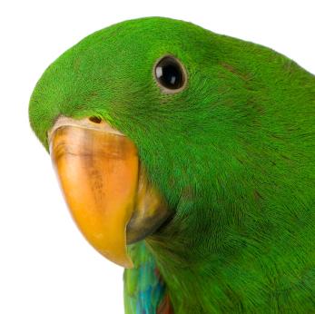 We need a GRIDMAN NPC The+Christian+Parrot+-+201+Blog
