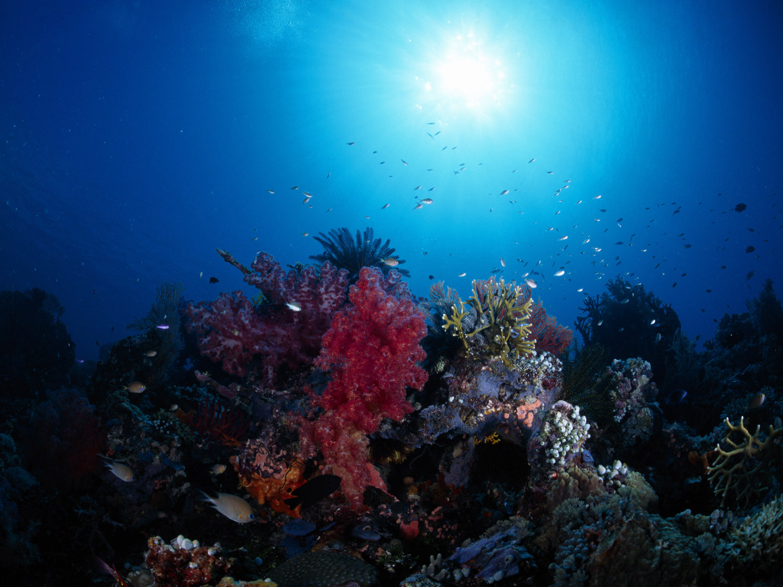 Underwater sea fishes hd wallpapers npicx we share - Underwater Beautiful Sea World Hd Pictures Npicx We Share